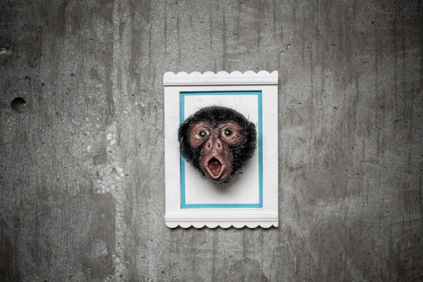 Lauren Wilde - Black Spider Monkey