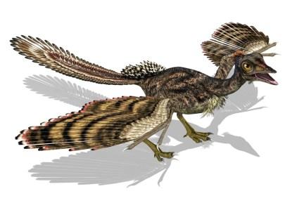 1 archaeopteryx