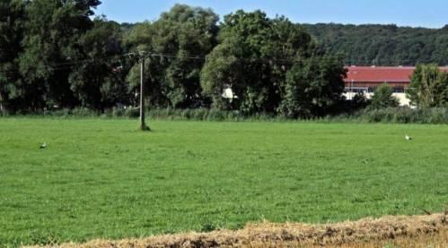 cigogne-mattaincourt (2)