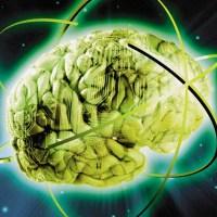 Cervello donna/uomo