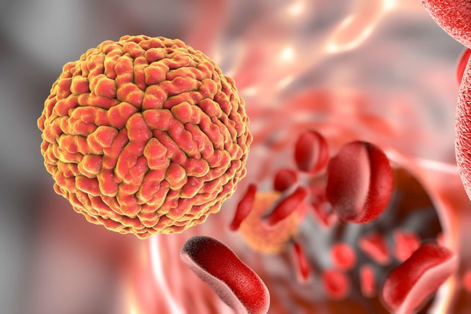 Illustration of Zika virus in blood Kateryna Kon/Science Photo Library
