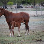 What to Look for in a Horse Zoned Property for Sale in Las Vegas