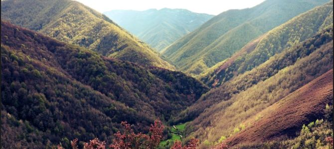 Bosque de Muniellos en primavera