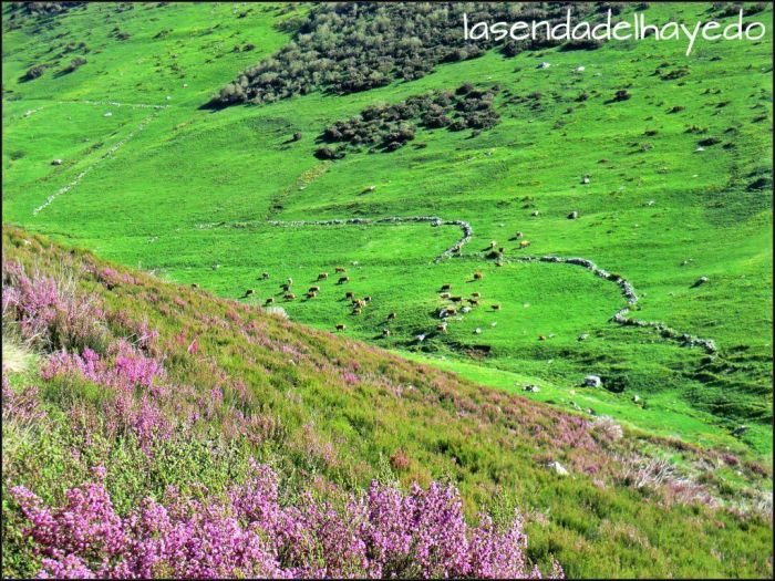 Clásica estampa de la montana leonesa