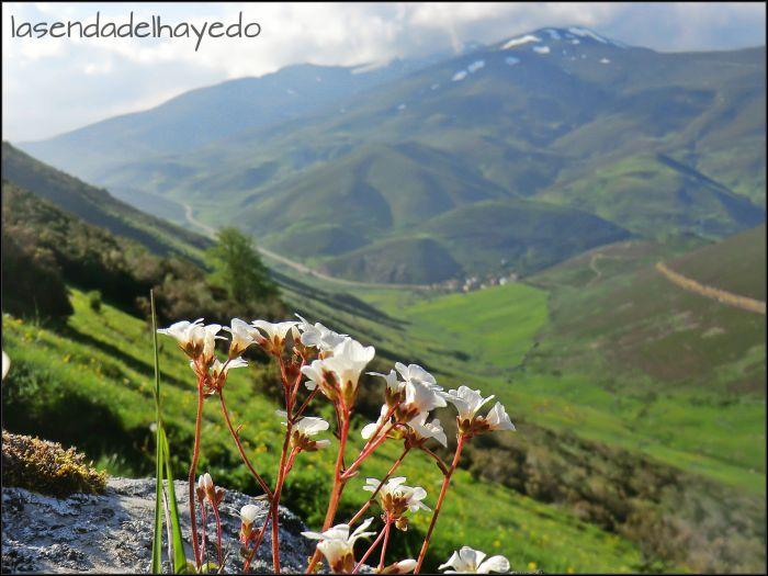 Montes del Cellón en primavera
