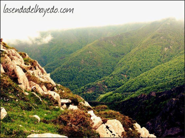 Valgrande, uno de los mejores bosques de la cordillera cantábrica