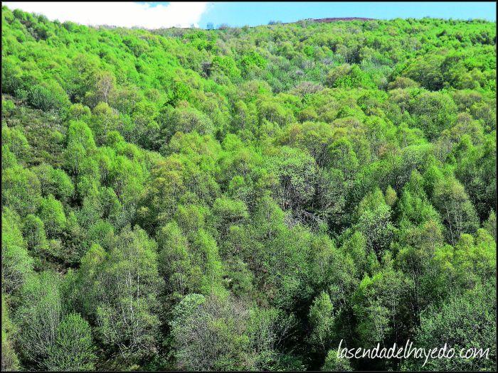 Bosque de Bustamores