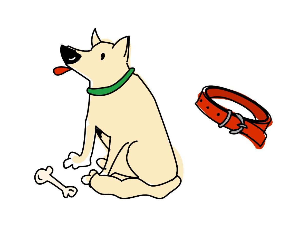 *夏はやっぱりコットンが一番~犬の首輪~