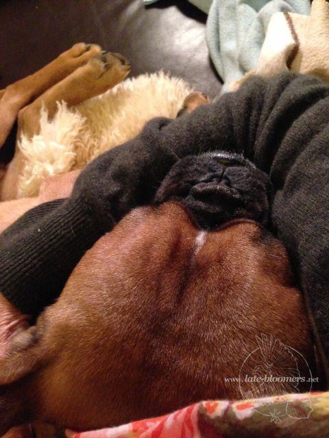 sleeping Roco