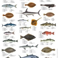 fish name list - List of Fish A Z