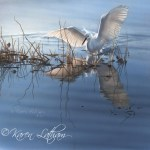 KL-An Imperfect Landing by Karen Latham (snowy egret) small copy