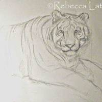 White Tiger - Sketch for the Painting