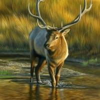 River Passage - Bull Elk