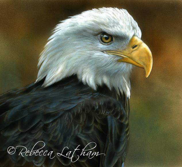 American Bald Eagle, 6in x 6in, ©Rebecca Latham