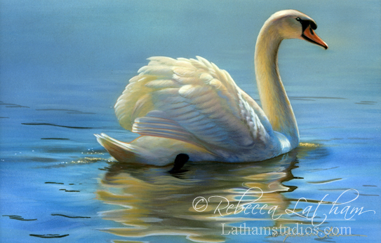 Warm Glow - Mute Swan,  Watercolor & 24kt gold 4in x 6in, ©Rebecca Latham