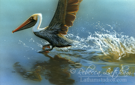 Taking Flight - Brown Pelican,  Watercolor & 24kt gold 4in x 6in, ©Rebecca Latham