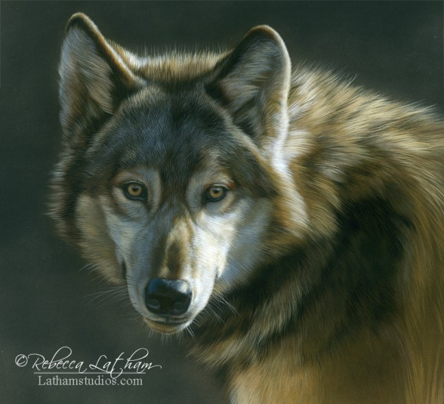 Early Light - Wolf,  watercolor & sterling silver, 10in x 11in, ©Rebecca Latham