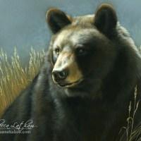 Maryland Black Bear Conservation Stamp
