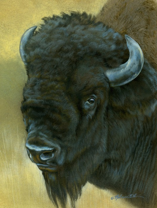 "Old Soul - Bison, watercolor on board with sterling silver, 6"" x 8"""