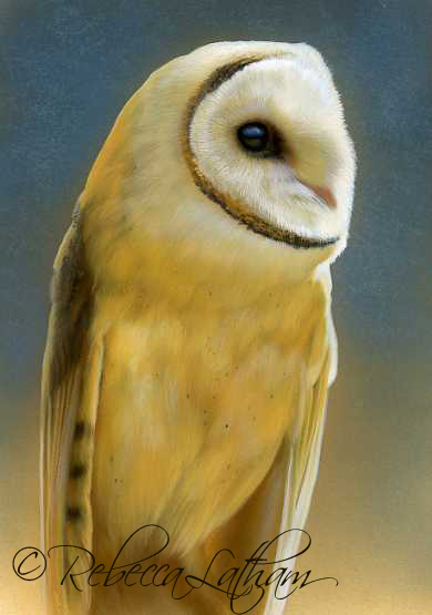 Blue and Gold - Barn Owl II,  Opaque & transparent watercolor with sterling silver and 24kt gold on board, 5in x 7in, ©Rebecca Latham