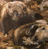 New watercolor widlife paintings by Rebecca Latham at Seaside Art Gallery