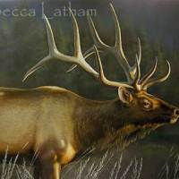 Large Bull Elk Watercolor Painting