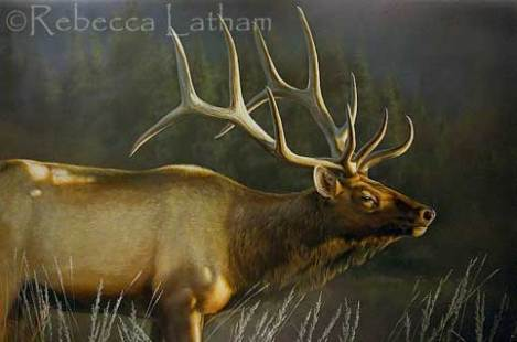 "This is a larger painting that I was working on a little earlier this week.  It's a 20"" x 30"" watercolor of a bull elk, titled ""Passage"".  This piece developed pretty rapidly.  I painted a study for this larger painting as a miniature 4"" x 6"".  The miniature study can be seen in this post."