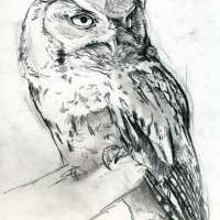 Screech Owl Painting (Sketch)