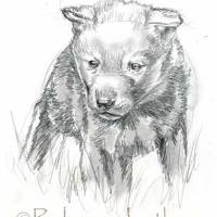 New Little Wolf Puppy Painting (initial sketch)