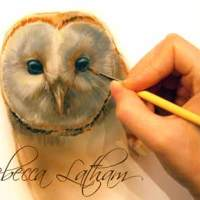 Barn Owl Portrait... A Work In Progress