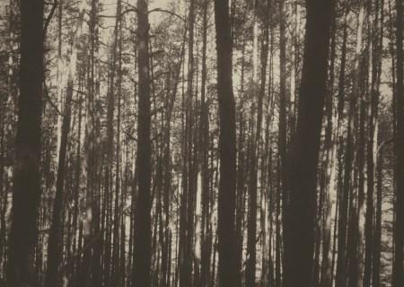 bosque bn