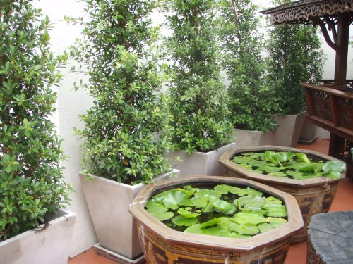 Medium Of Hanging Garden Ideas