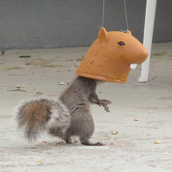 Sir Nuts a Plenty