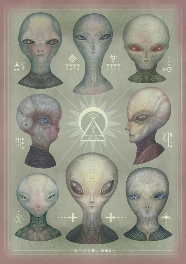 The Greys by Vladimir Stankovic