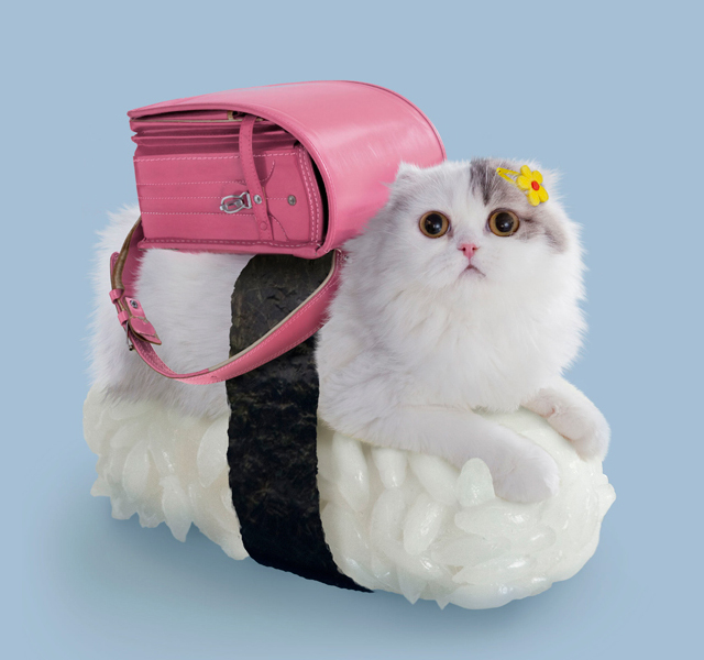Sushi Cat Toro Beauty