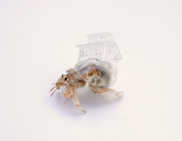 Hermit crab shells by Aki Inomata