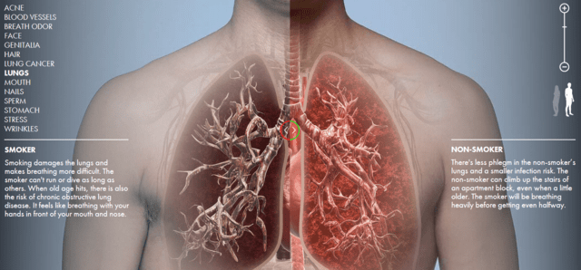 Interactive Website Shows What Tobacco Does To The Body