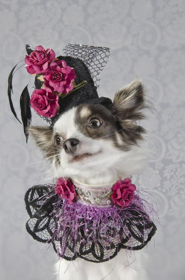 Dog Vogue