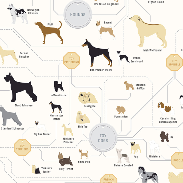 The Diagram of Dogs by Pop Chart Lab