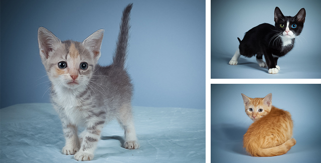 The Kitty Stars of Puppy Bowl X