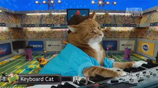 Keyboard Cat Puppy Bowl X
