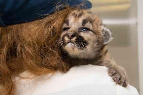 Cougar Cub and Michelle Schireman