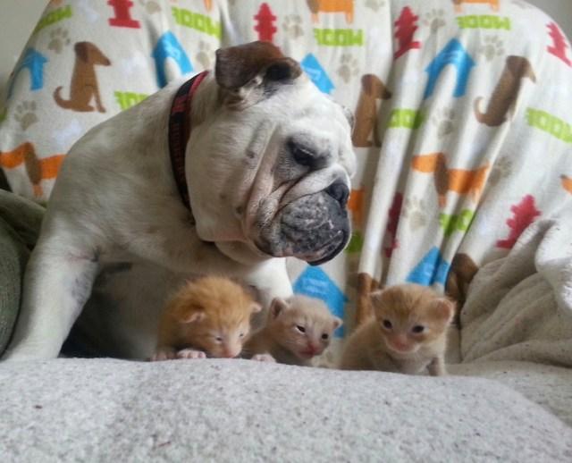 Hammie and Kitten 3