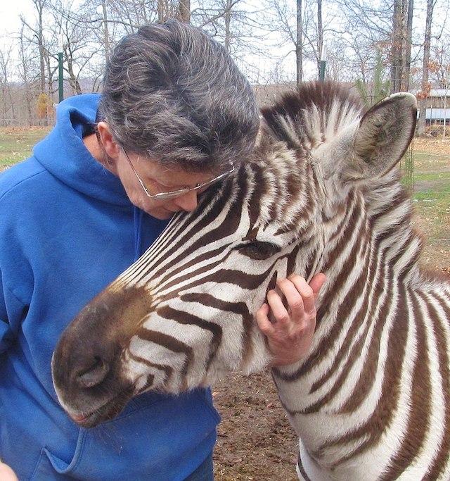 Janice Wolf and Barcode the Zebra