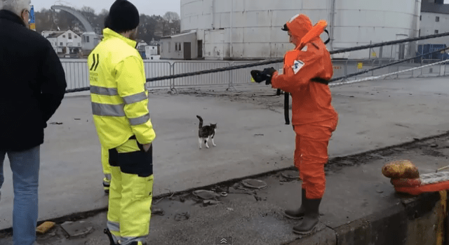 Rescued Cat with Rescuer