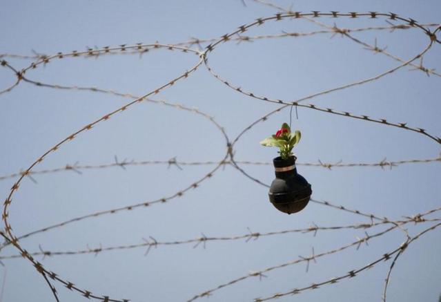 Palestinian Woman Plants Tear Gas Canister Flower Garden