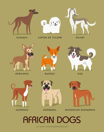African Dogs