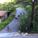 Popular YouTube Video of a Deer Encounter With a Cat 'Translated' to Reveal What the Deer Are Saying