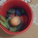 Rainbow Lorikeet Whistles Happily While Playing with a Ball Inside a Red Pail