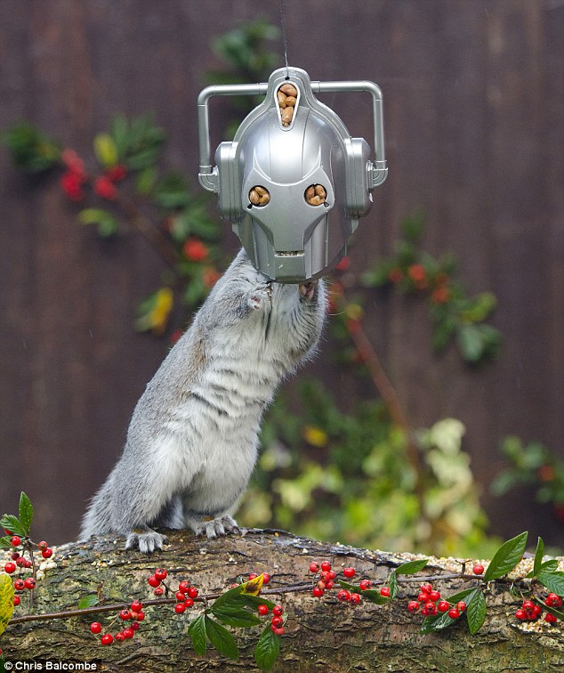 Cyber Squirrel